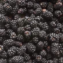 Blackberry – Health Benefits, Uses, Research, Preparation, Precautions